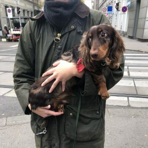 """I decided to ask the owners about the weenie's names if I can: so here's """"Flin"""" 🥰..."""