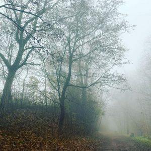 Fog #vienna #mtblife Kahlenberg