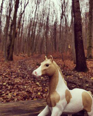 Wienerwald adventure #littlehorsebigadventures #vianakeks #viana #vienna #adventure #naturephotography #microadventures #autumnwalks #horsey #horsesofinstagram #wienerwald ...