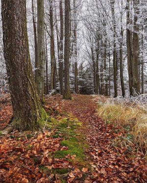 In between the seasons 🍂❄️ 📸 ©Andreas Hofer #jahreszeitenwechsel #derwienerwald #herbst #winter #autumnvibes🍁 ...