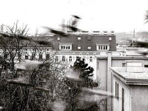 Birds. #vienna #ottakring #earlybird #birds #bw Ottakringer 1160