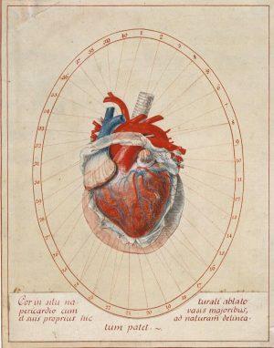 Die kolorierte Zeichnung aus der zweite Hälfte des 18. Jahrhundert stammt aus Florenz und korrespondiert mit einem...