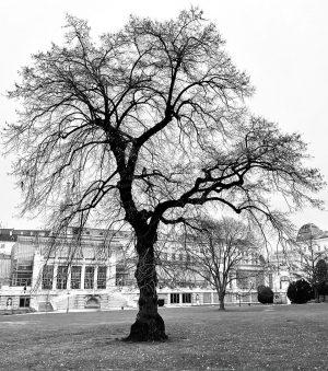 #Burggarten #Wien #Palmenhaus Neujahrsspaziergang #IloveVienna #AlteBäume