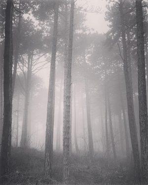 #wienerwald #nebel #mist
