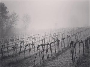 #wienerwald #nebel #mist #weinfelden