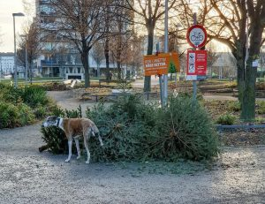 Best of Christbaum von euch. Thx to @gutbesservanessa @wien_machine @roth__hannah @wiener_menscha @claudia_del_mar und einen Foto aus Linz...