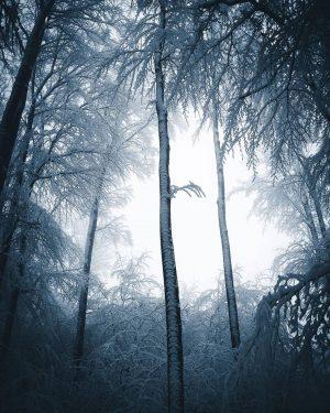 Let it snow 🙌🏼 📸 @anskar.lenzen #derwienerwald #wienerwald #viennawoods #nature #outdoors #visitniederösterreich Wienerwald