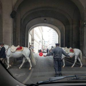 Alt, precedenza ai cavalli lipizzani #cavalli #lipizzaner #spanischereitschule #pferde #pferdeliebe Vienna - Centro