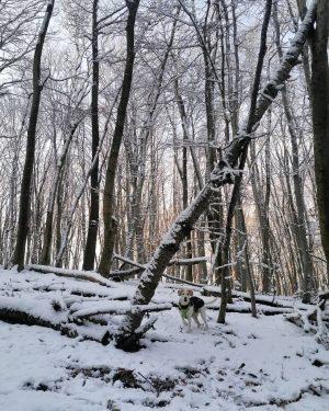 nachdem gestern das internet voll mit bildern vom #winterwonderland war haben wir uns ...