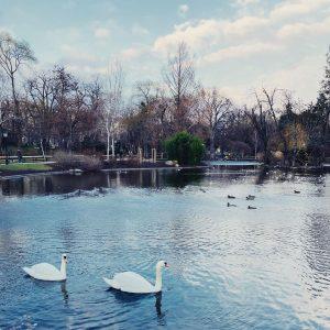 Mal wieder spazieren 😳! #vienna #wien #stadtpark #schwäne #winterinvienna #corona #lockdownlife #walkinthepark #january ...