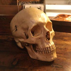 Lehrmittel aus Kunststoff. 👍🏻 EUR 75 #skull #lehrmittel #dekoration #dekorative #shoplocal #ohnehirn #lockdown #shopping Dekorative