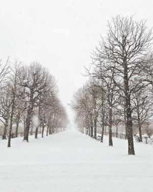 A snowy weekend in Vienna 🌨☃️❄ #snowinvienna