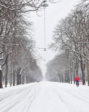 snowy hauptallee with a red dot ❄ # #hauptallee #prater #leopoldstadt #polditown #wien ...