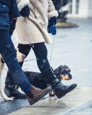 Dogs and legs. #igersvienna #vienna #wienerblicke #wienliebe #viennatouristboard #1000thingsinvienna #vienna_go #vienna_city #viennascene #cityscene ...