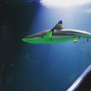 Haus des Meeres Zoo
