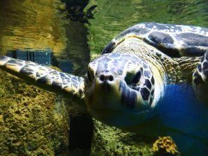#hausdesmeeres #hausdesmeereswien #wienliebe #turtle #komododragon #crocodile #crocodilefeeding #zoo #aquarium #instaanimals Haus des Meeres Zoo