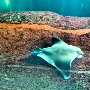 Im Haus des Meeres vor einem Jahr #hausdesmeeres Haus des Meeres Zoo