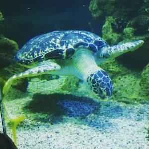🐢🐢🐢 Haus des Meeres Zoo