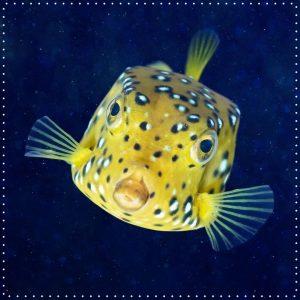 Wusstet ihr, dass der kantige Körper des gelbbraunen Kofferfisches so hydrodynamisch ist, dass er als Vorbild für...