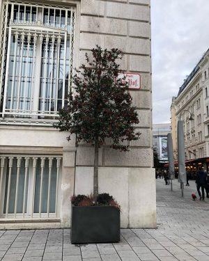Ein Baum ist besser als kein Baum 🌳 #straßenbaum #dernächstefrühlingkommtbestimmt #feedthebees🐝 #fürmehrgrüninderstadt #gibdernaturetwaszurück #wienliebe Innere Stadt