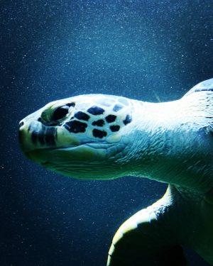 #turtle #wasserschildkröte #hausdesmeeres #wien #hausdesmeereswien #zoovienna #fernweh #tauchen #aquariumhouse #aquarium #seaturtle Haus des Meeres Zoo