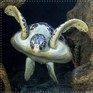 Jeder kennt sie, jeder liebt sie! Die wohl bekannteste Meeresschildkröte Österreichs - Puppi 🐢 Sie ist die...