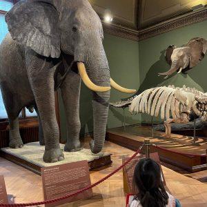 Uma tarde no museu 🏛🦖 NhM Naturhistorisches Museum Wien