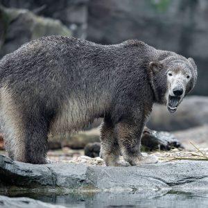 Bei Eisbären-Mädchen Finja 🐻❄️ ist immer Action angesagt 🐾: Sie planscht im Wasser, ...