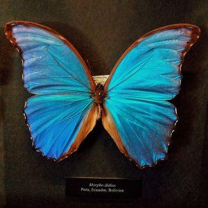 Найгарніші метелики, що я бачила💞😍🦋 NhM Naturhistorisches Museum Wien