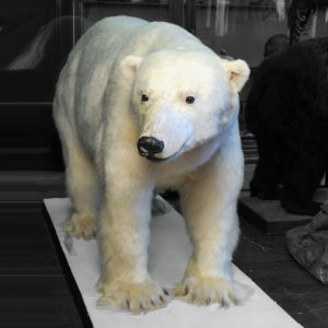 Today is #InternationalPolarBearDay! This day intends to raise awareness for the protection of ...