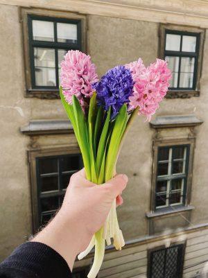 frühling im februar #hyazinthen #hyacinths #frühling #springtime #vienna #wien