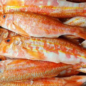 Pure Perfektion - unsere Rotbarben aus der Bretagne #fischgruber #naschmarkt #fischmarkt #bretagne #wildfang Fisch Gruber