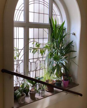 🌱 LOOKING FOR SPRING 🌱 das liebe ich an Wien 💗 #ausblick #stiegenhaus ...