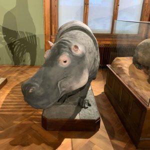 From Sunday's museum visit. Part 3 NhM Naturhistorisches Museum Wien