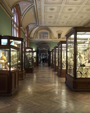. . 📍 Museum of Natural History Vienna, Austria The way in natural ...