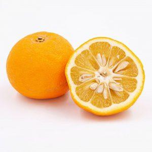 BITTERORANGE Jeder kennt die für uns typischen süßen Orangen. Diese sind jedoch eine Unterart der Bitterorangen (oder...