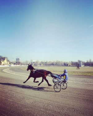 #vienna #wien #austria #oesterreich #österreich #krieau #viertelzwei #krieautrabrennbahn #pferdewetten #horseracing #harnessrscing #betting #horsebetting #trabennbahn #prater #lockdown #march2021...