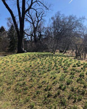 Hallo Frühling 🌺 Botanischer Garten der Universität Wien