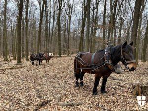 Tierische Helfer im Lainzer Tiergarten! - Aufmerksame BesucherInnen haben es vielleicht schon bemerkt - Fuhrwerker Hannes und...