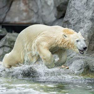 Mit einem Bauchfleck 😃 von Eisbären-Mädchen Finja wünschen wir euch ein schönes Wochenende! ...
