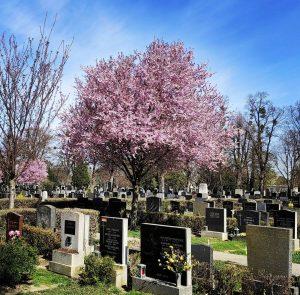 #mylittlevienna #wien #wienliebe #wienstagram #zentralfriedhof #eslebederzentralfriedhof #city #viennaaustria #vienna_austria #vienna #graveyard #cemetery #friedhof #spring #lilac #flieder Wiener...