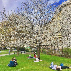 Frühling in Wien, Zeit für einen Wiederbeginn! #viennagram #wienliebe Burggarten