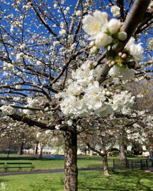#springlove #burggarten #vienna Burggarten