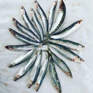 🐟🐟 GEWINNSPIEL 🐟🐟 Diese Fischerl sehen sich sehr ähnlich....wer erkennt oder errät wie ...