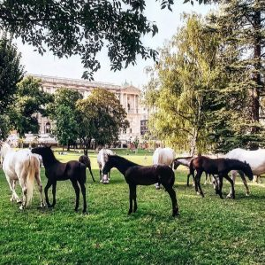 #vienna #horses #horseriding #spanishridingschool #wien #amazingplaces #amazinganimals #koferupokretu #ridingaround #freedom Vienna
