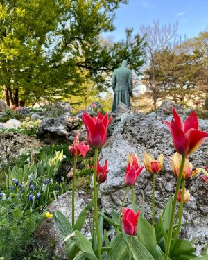 Turn away. . . . #visitaustria #earth #travelingtheworld #topaustriaphoto #springvibes #gramslayers #visualambassadors #photographer #wien #vienna_go #wienliebe #blossoms...
