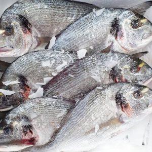 AKTION - Goldbrasse Wildfang aus der Bretagne - 58,5€ statt 69,5€ #fischgruber #naschmarkt ...