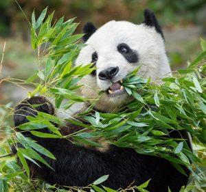 Am Montag ist es soweit 🤗: Wir dürfen unsere Tore wieder öffnen. Egal, ob Elefanten, Pandas oder...