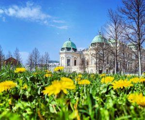 Upper Belvedere through the dandelions . . . . #austria #österreich #vienna #wien ...