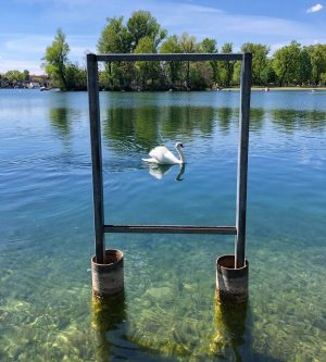 🖼🦢 Alte Donau